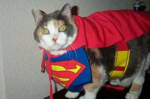 funny_superman_cat_picture