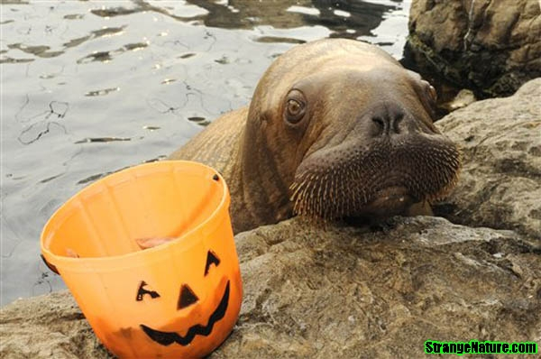 Halloween Spirit at the Aquarium